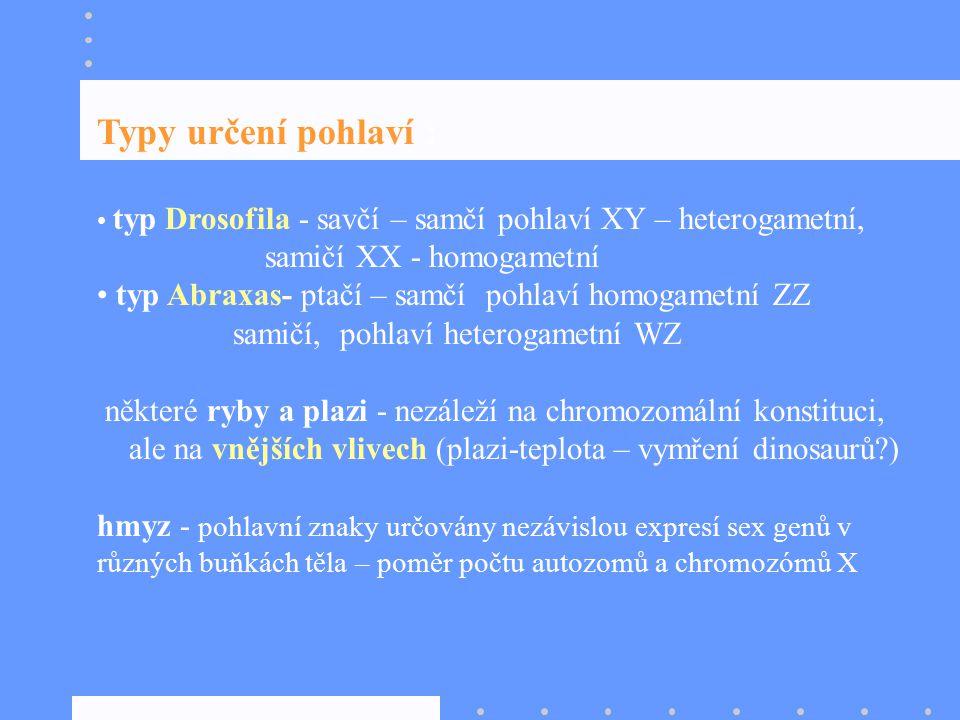 Typy určení pohlaví : samičí XX - homogametní