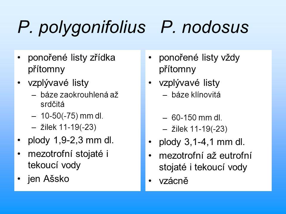 P. polygonifolius P. nodosus