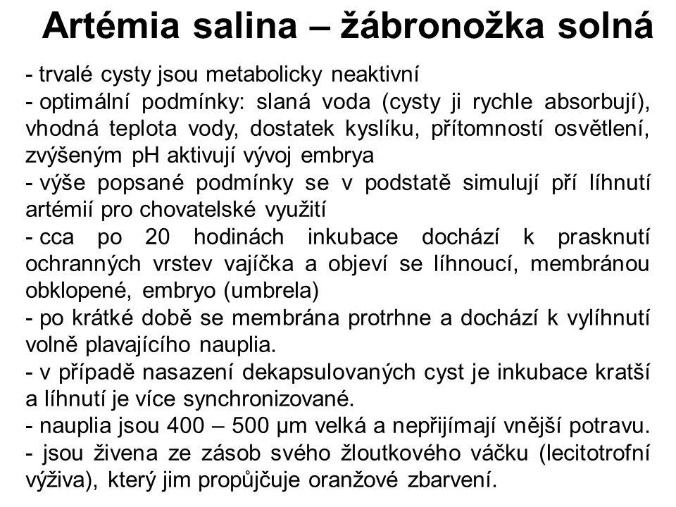 Artémia salina – žábronožka solná