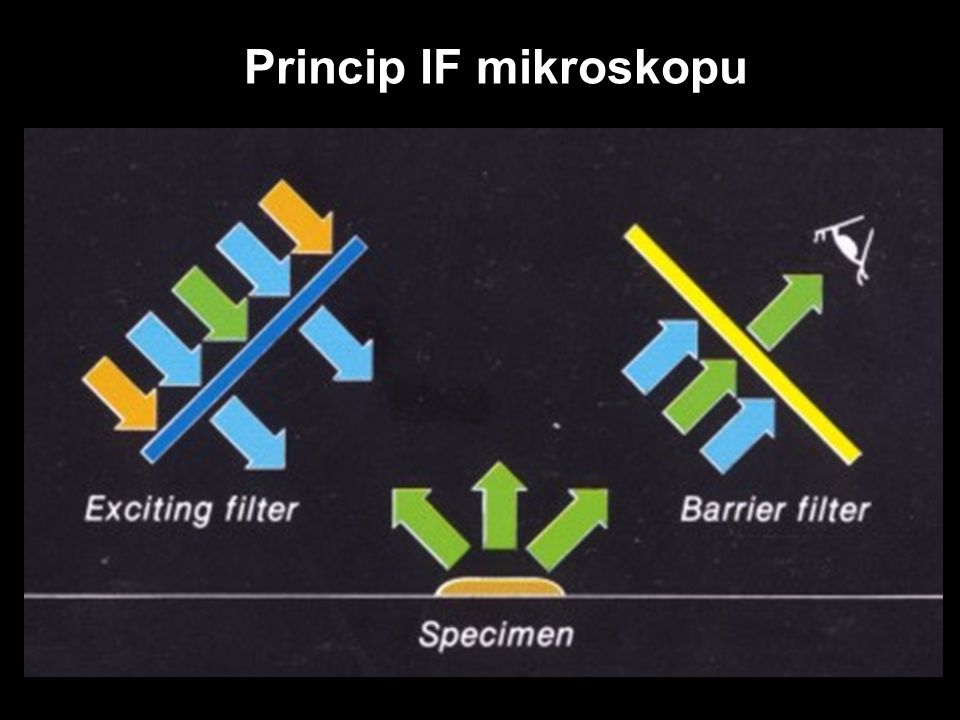 Princip IF mikroskopu