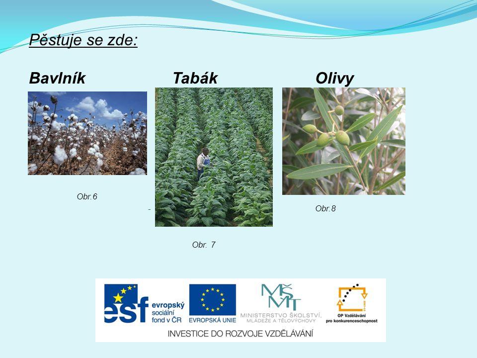 Pěstuje se zde: Bavlník Tabák Olivy Obr.6 Obr.8 Obr. 7