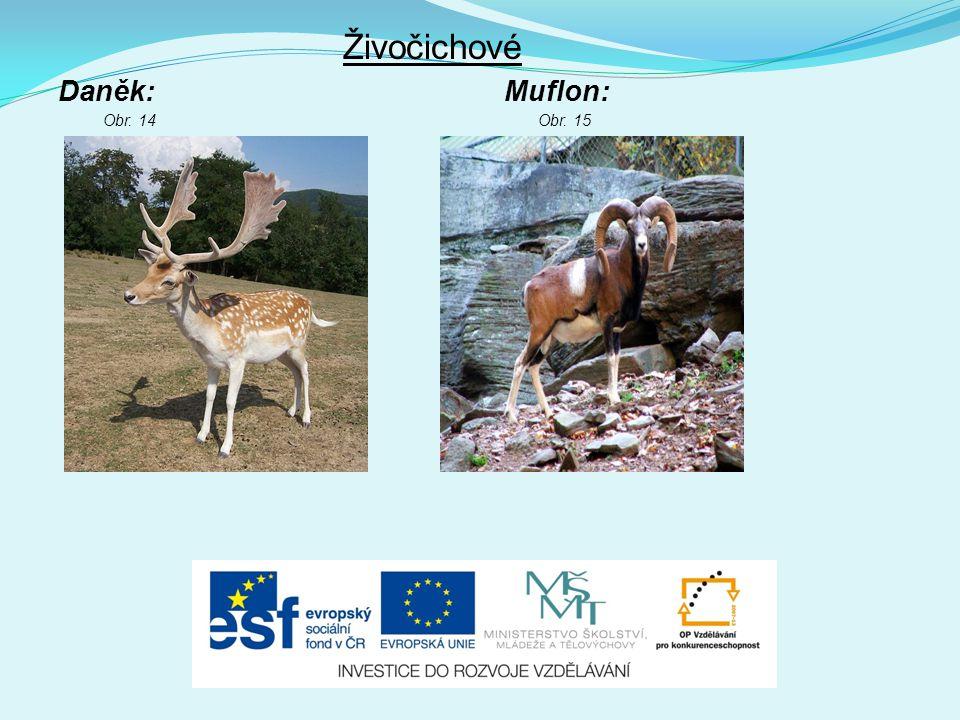 Živočichové Daněk: Muflon: Obr. 14 Obr. 15
