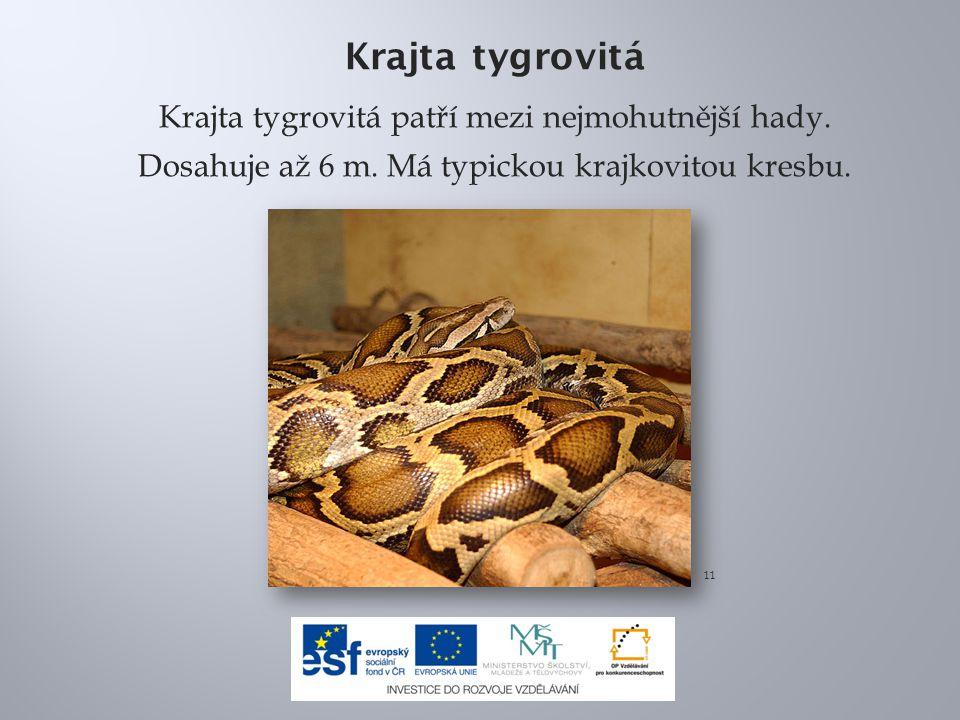 Krajta tygrovitá Krajta tygrovitá patří mezi nejmohutnější hady. Dosahuje až 6 m. Má typickou krajkovitou kresbu.