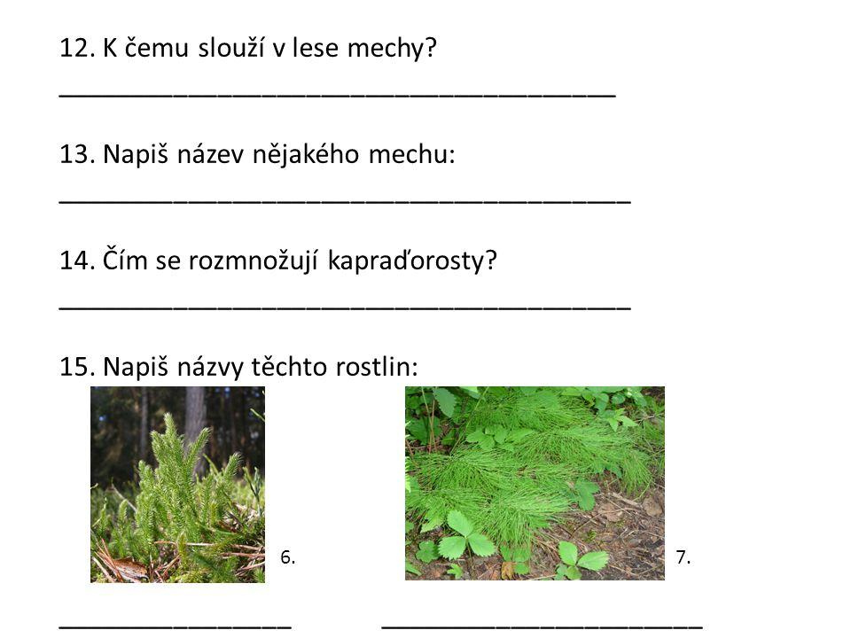 12. K čemu slouží v lese mechy