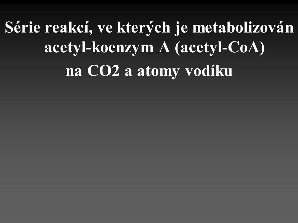 Série reakcí, ve kterých je metabolizován acetyl-koenzym A (acetyl-CoA)