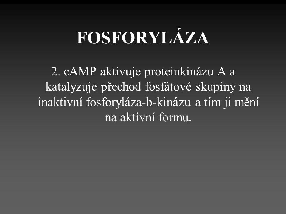FOSFORYLÁZA 2.