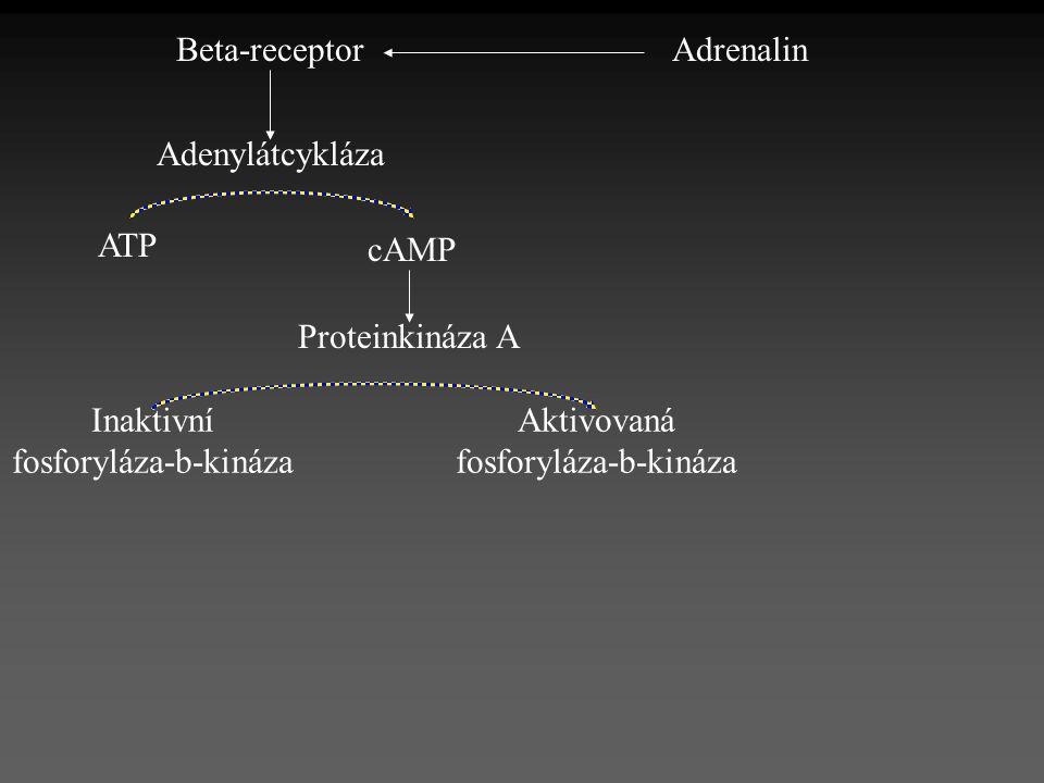 fosforyláza-b-kináza Aktivovaná fosforyláza-b-kináza