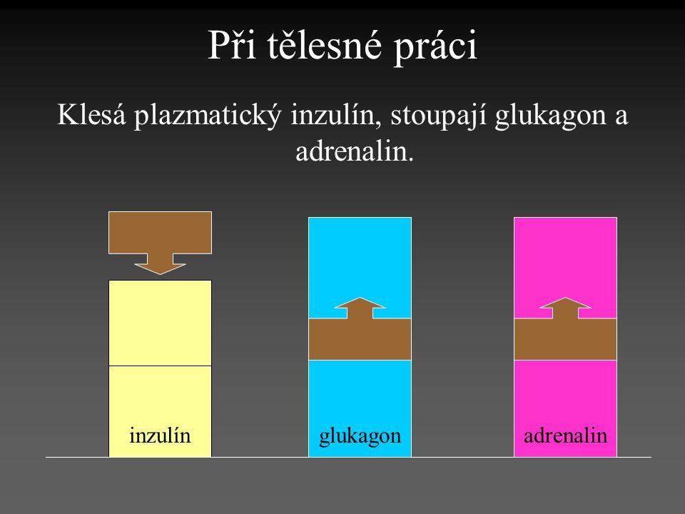 Klesá plazmatický inzulín, stoupají glukagon a adrenalin.
