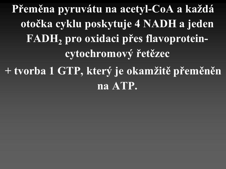 + tvorba 1 GTP, který je okamžitě přeměněn na ATP.