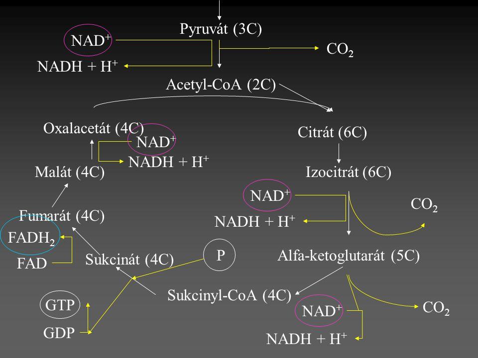 Alfa-ketoglutarát (5C)