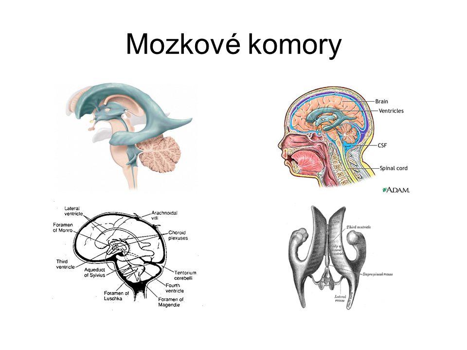 Mozkové komory