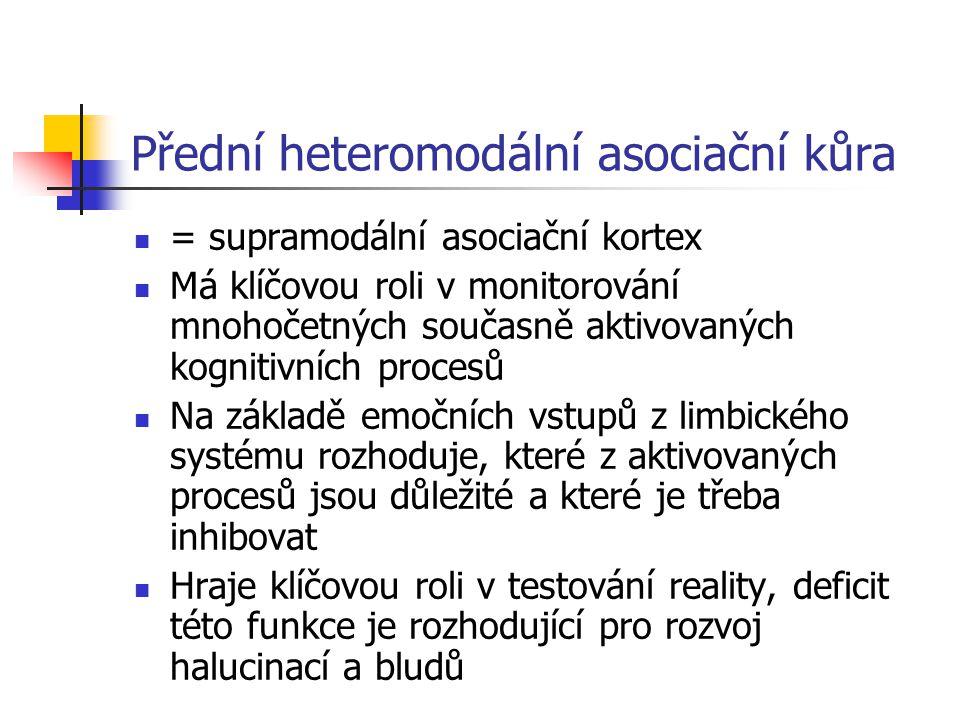 Přední heteromodální asociační kůra