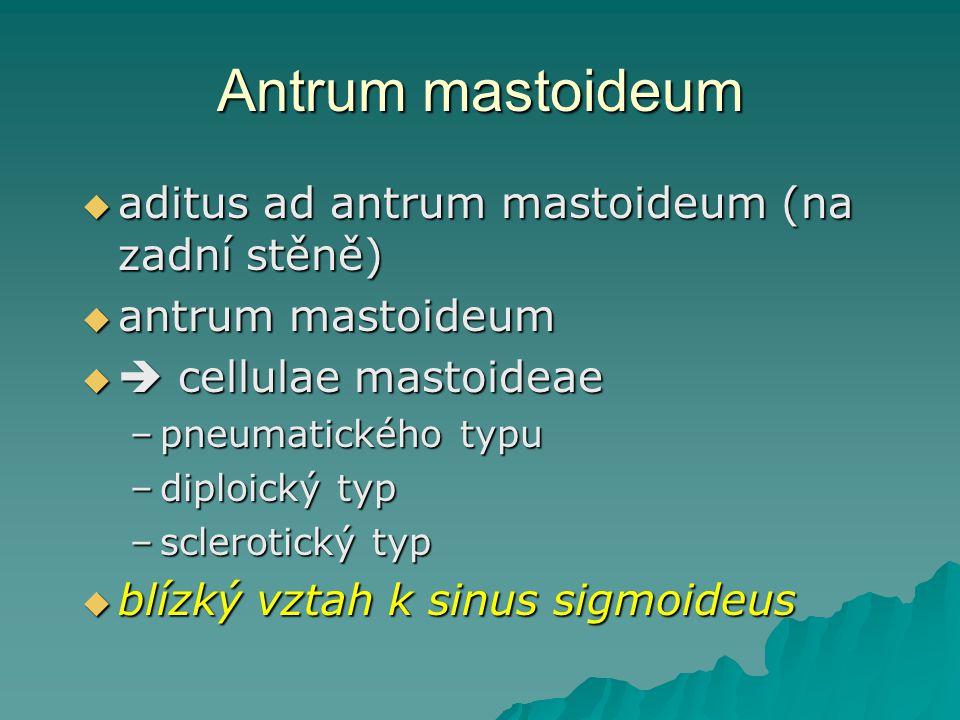 Antrum mastoideum aditus ad antrum mastoideum (na zadní stěně)