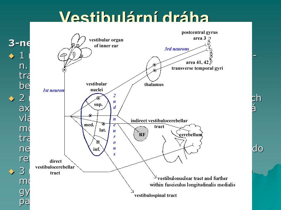 Vestibulární dráha 3-neuronová zkřížená dráha