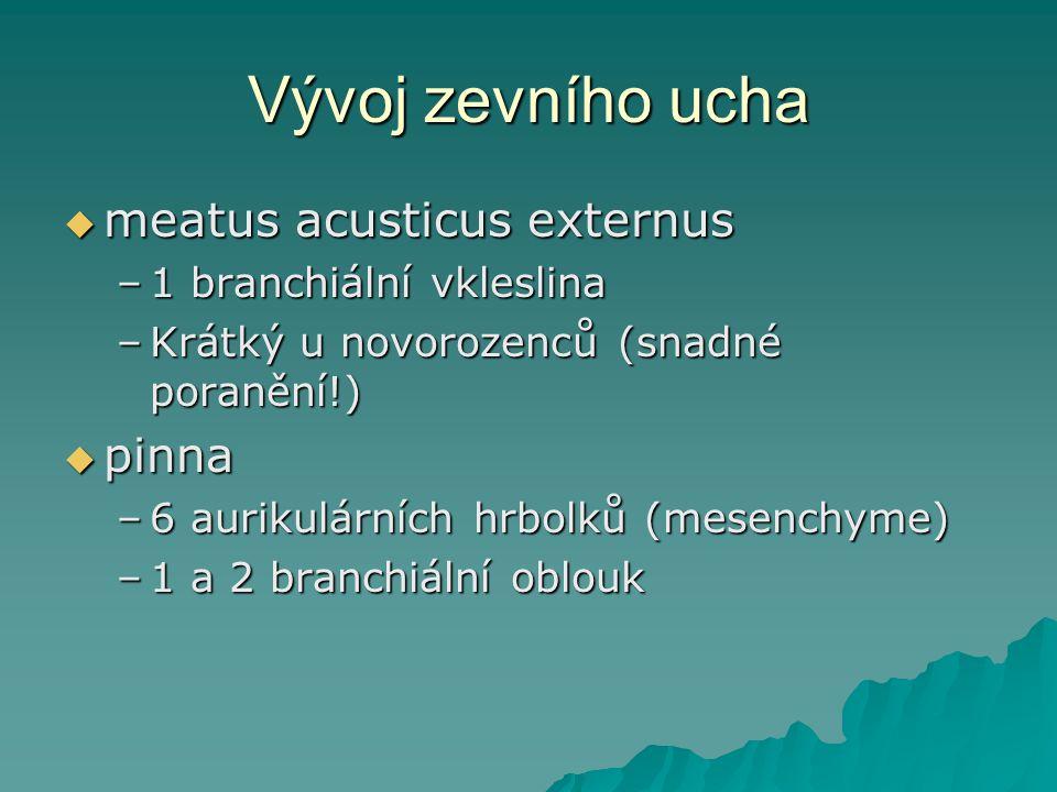Vývoj zevního ucha meatus acusticus externus pinna