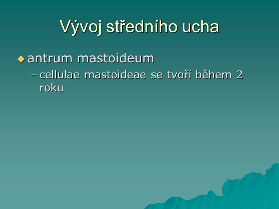 Vývoj středního ucha antrum mastoideum