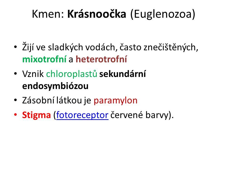 Kmen: Krásnoočka (Euglenozoa)