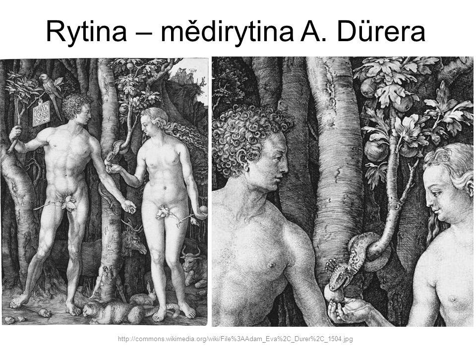 Rytina – mědirytina A. Dürera