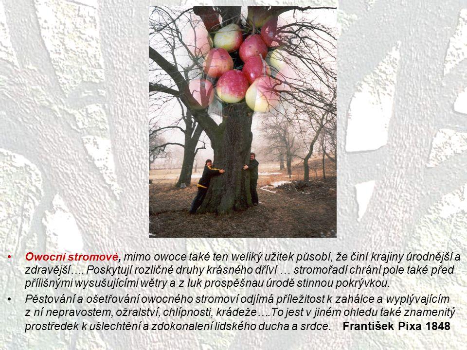Owocní stromové, mimo owoce také ten weliký užitek působí, že činí krajiny úrodnější a zdravější…. Poskytují rozličné druhy krásného dříví … stromořadí chrání pole také před přílišnými wysušujícími wětry a z luk prospěšnau úrodě stinnou pokrývkou.