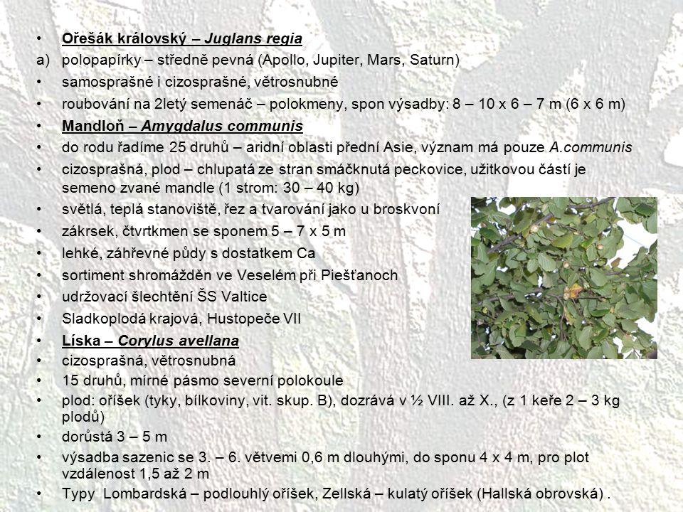 Ořešák královský – Juglans regia