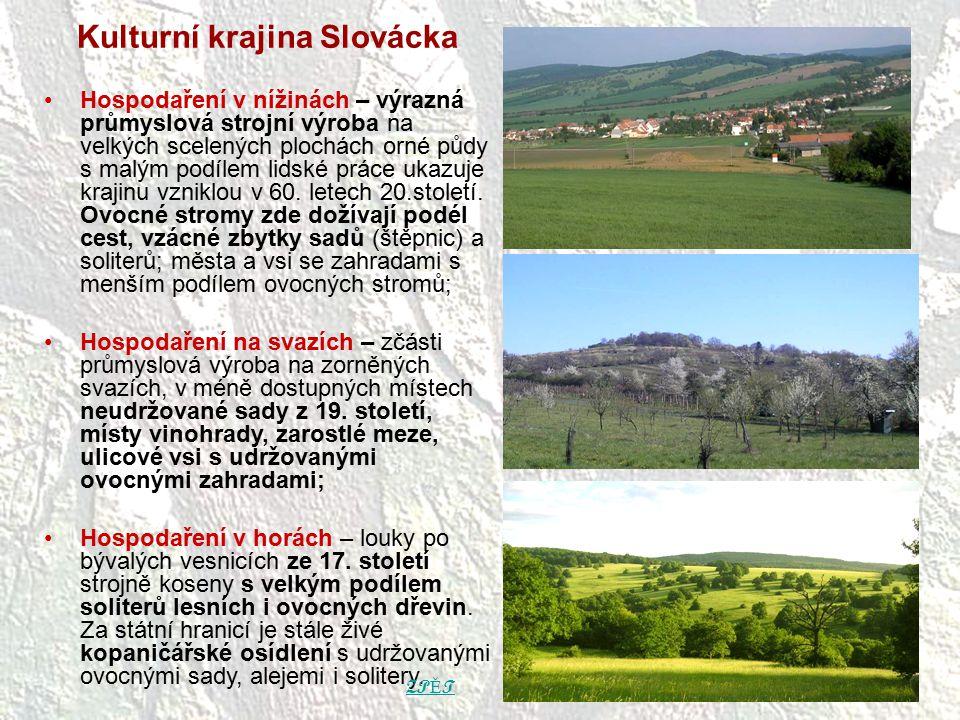 Kulturní krajina Slovácka