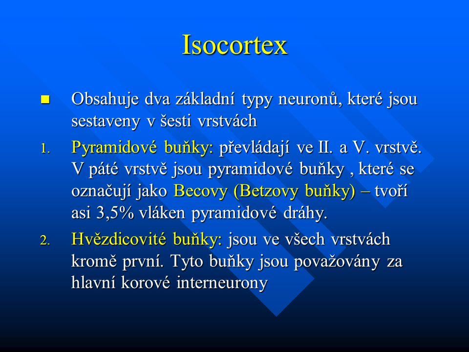 Isocortex Obsahuje dva základní typy neuronů, které jsou sestaveny v šesti vrstvách.
