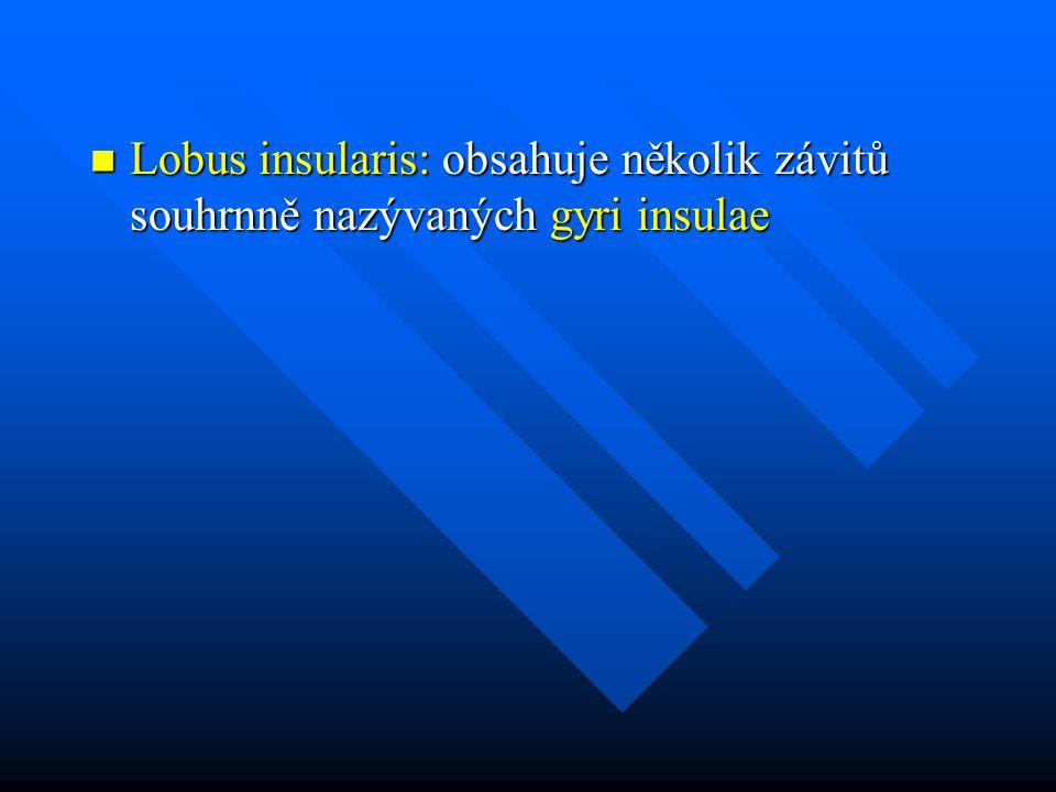 Lobus insularis: obsahuje několik závitů souhrnně nazývaných gyri insulae