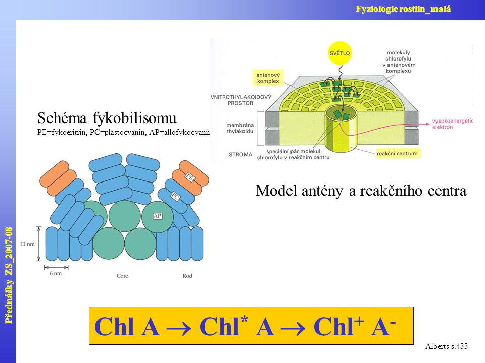Chl A  Chl* A  Chl+ A- Schéma fykobilisomu