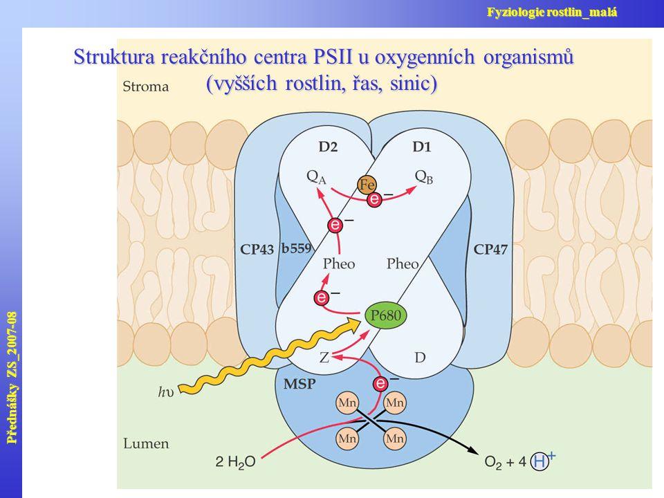 Přednášky ZS_2007-08 Fyziologie rostlin_malá. Struktura reakčního centra PSII u oxygenních organismů (vyšších rostlin, řas, sinic)
