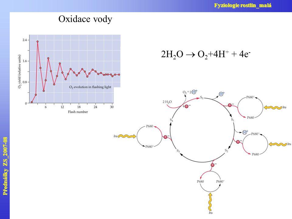 Oxidace vody 2H2O  O2+4H+ + 4e- Fyziologie rostlin_malá