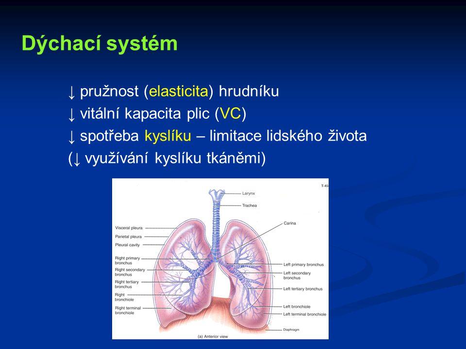 Dýchací systém ↓ pružnost (elasticita) hrudníku