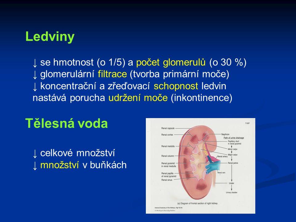 Ledviny Tělesná voda ↓ se hmotnost (o 1/5) a počet glomerulů (o 30 %)