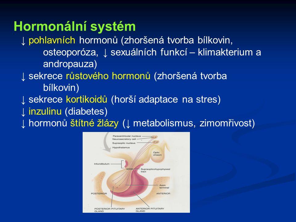 Hormonální systém ↓ pohlavních hormonů (zhoršená tvorba bílkovin, osteoporóza, ↓ sexuálních funkcí – klimakterium a andropauza)