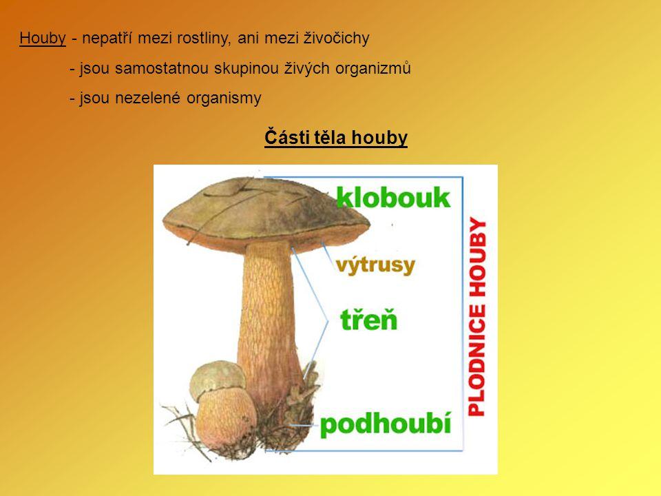 Části těla houby Houby - nepatří mezi rostliny, ani mezi živočichy