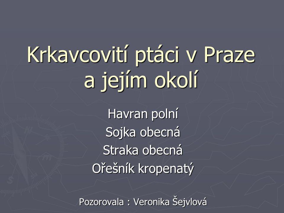 Krkavcovití ptáci v Praze a jejím okolí