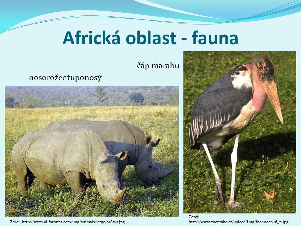 Africká oblast - fauna čáp marabu nosorožec tuponosý Hrabáč