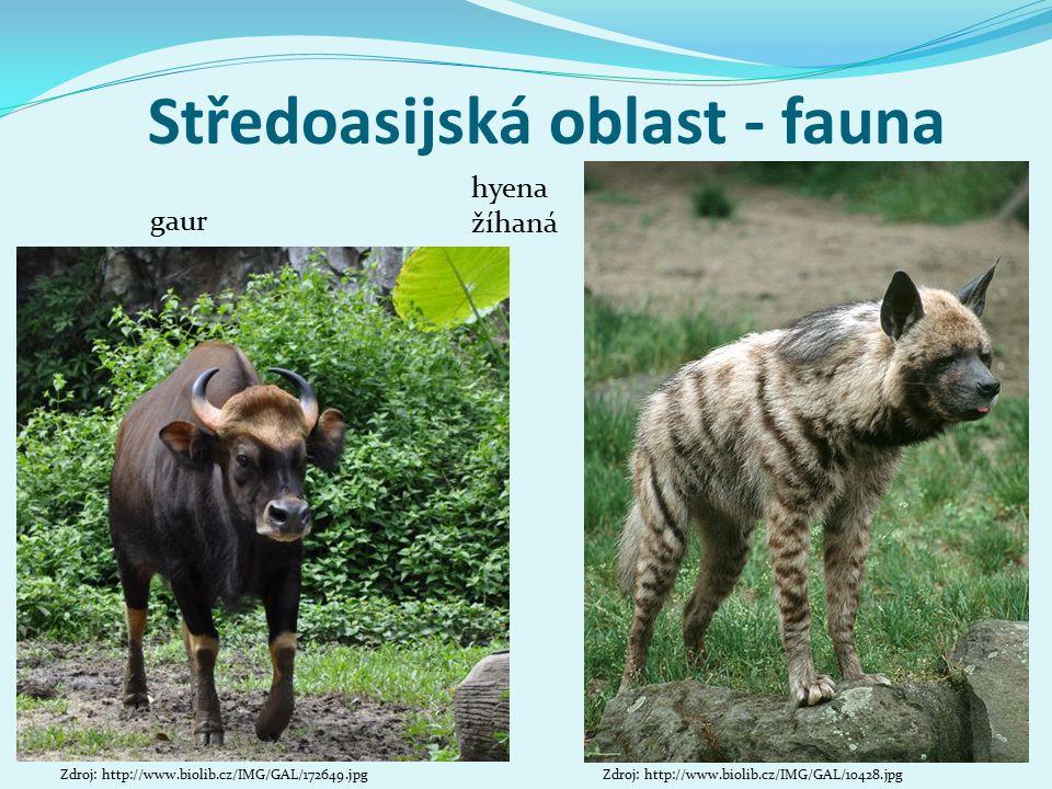 Středoasijská oblast - fauna