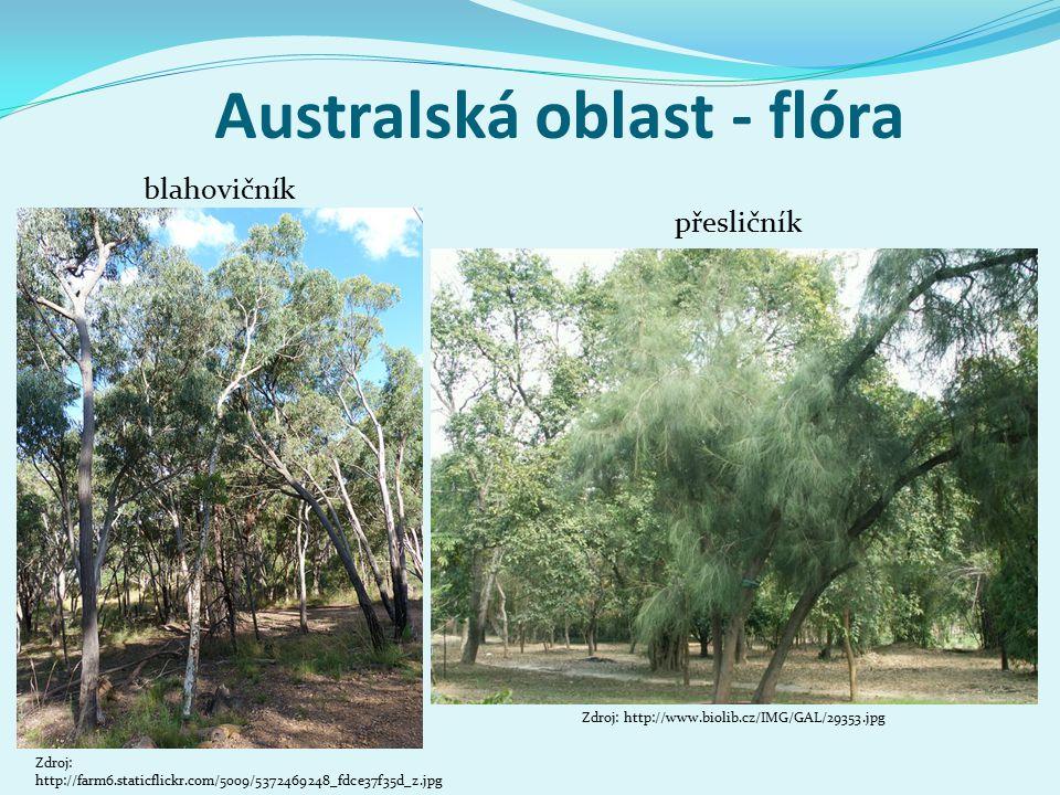 Australská oblast - flóra