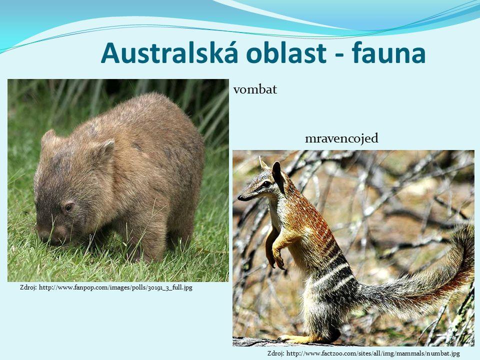 Australská oblast - fauna