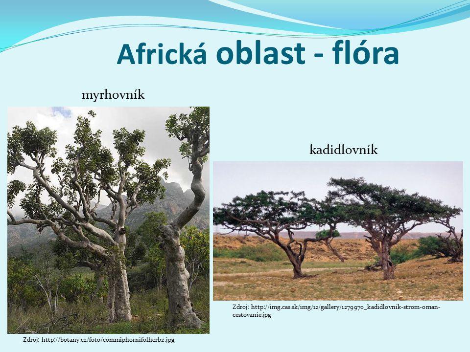Africká oblast - flóra myrhovník kadidlovník