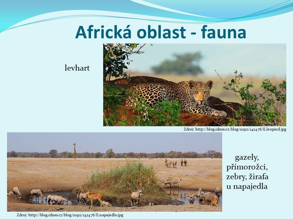 gazely, přímorožci, zebry, žirafa u napajedla