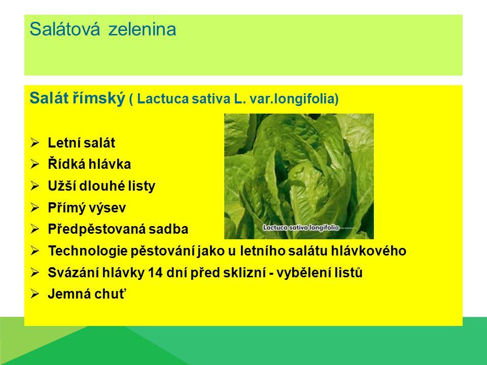 Salátová zelenina Salát římský ( Lactuca sativa L. var.longifolia)
