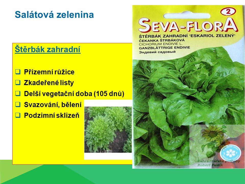 Salátová zelenina Štěrbák zahradní Přízemní růžice Zkadeřené listy