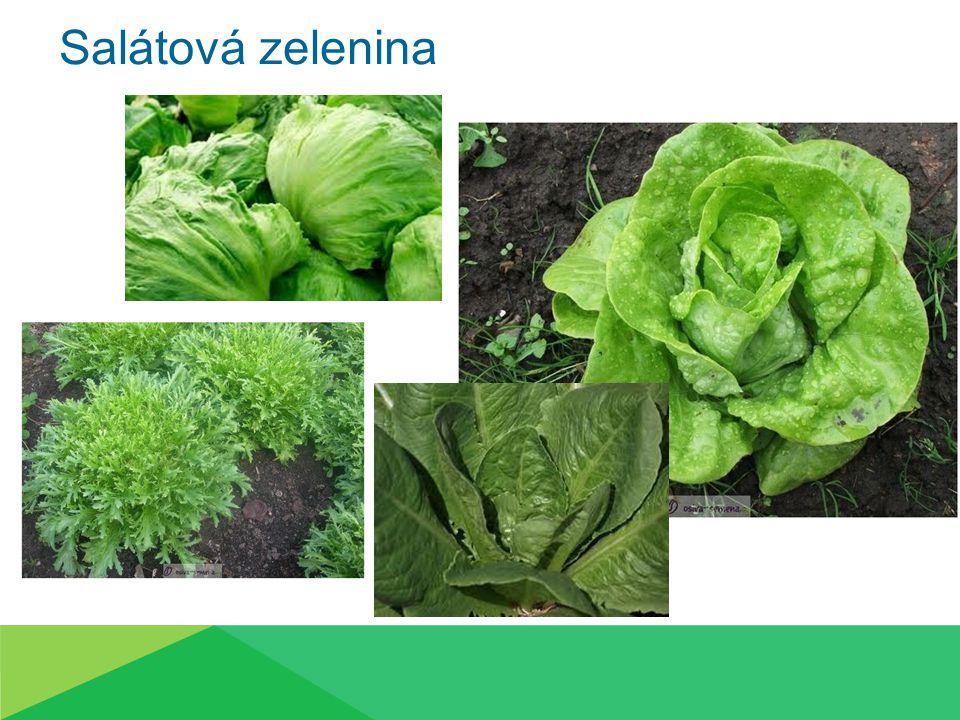 Salátová zelenina