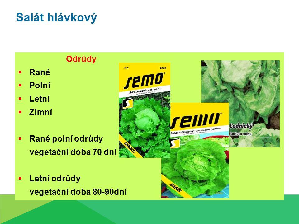 Salát hlávkový Odrůdy Rané Polní Letní Zimní Rané polní odrůdy