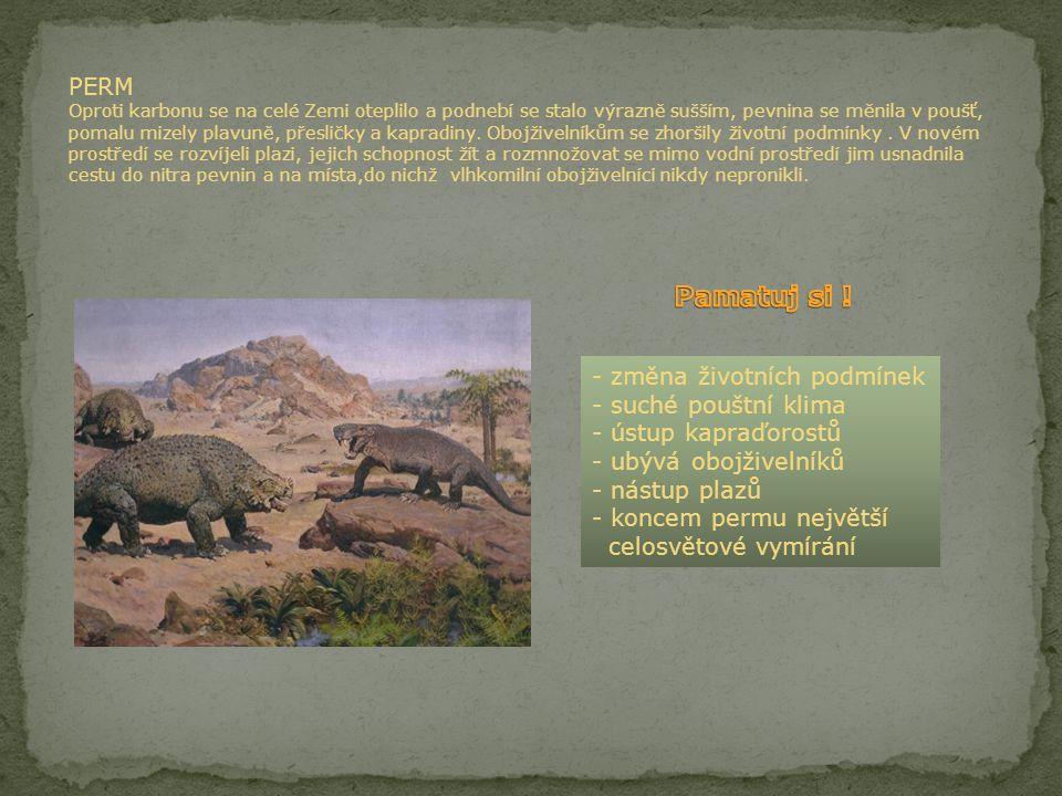 PERM Oproti karbonu se na celé Zemi oteplilo a podnebí se stalo výrazně sušším, pevnina se měnila v poušť, pomalu mizely plavuně, přesličky a kapradiny. Obojživelníkům se zhoršily životní podmínky . V novém prostředí se rozvíjeli plazi, jejich schopnost žít a rozmnožovat se mimo vodní prostředí jim usnadnila cestu do nitra pevnin a na místa,do nichž vlhkomilní obojživelníci nikdy nepronikli.