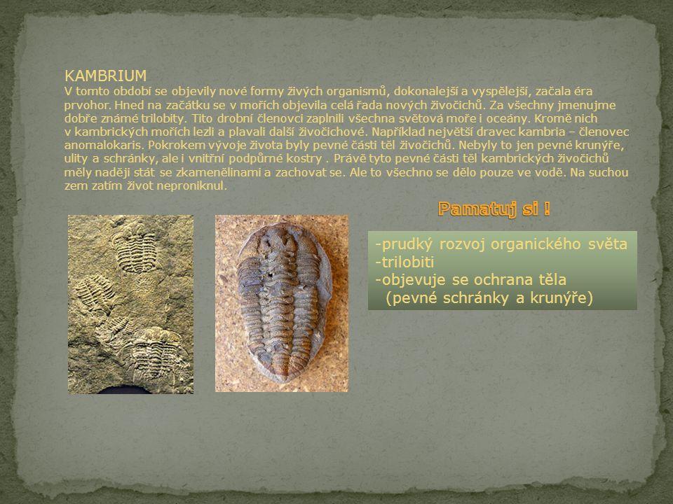 KAMBRIUM V tomto období se objevily nové formy živých organismů, dokonalejší a vyspělejší, začala éra prvohor. Hned na začátku se v mořích objevila celá řada nových živočichů. Za všechny jmenujme dobře známé trilobity. Tito drobní členovci zaplnili všechna světová moře i oceány. Kromě nich v kambrických mořích lezli a plavali další živočichové. Například největší dravec kambria – členovec anomalokaris. Pokrokem vývoje života byly pevné části těl živočichů. Nebyly to jen pevné krunýře, ulity a schránky, ale i vnitřní podpůrné kostry . Právě tyto pevné části těl kambrických živočichů měly naději stát se zkamenělinami a zachovat se. Ale to všechno se dělo pouze ve vodě. Na suchou zem zatím život neproniknul.