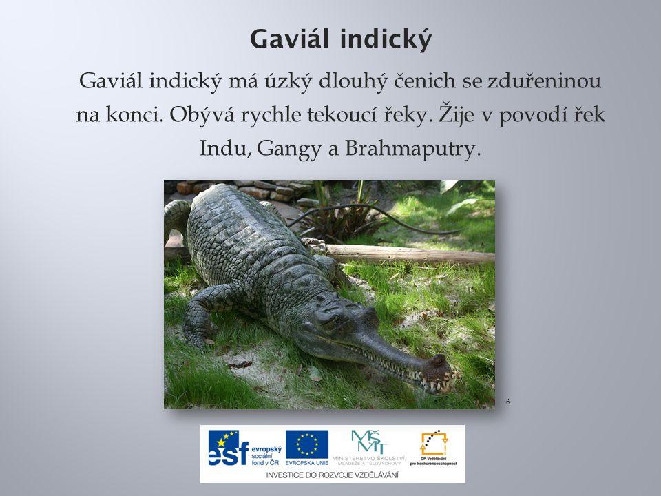Gaviál indický Gaviál indický má úzký dlouhý čenich se zduřeninou na konci. Obývá rychle tekoucí řeky. Žije v povodí řek Indu, Gangy a Brahmaputry.