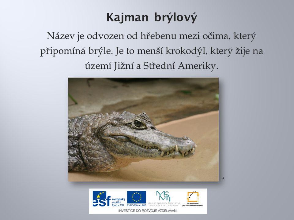Kajman brýlový Název je odvozen od hřebenu mezi očima, který připomíná brýle. Je to menší krokodýl, který žije na území Jižní a Střední Ameriky.