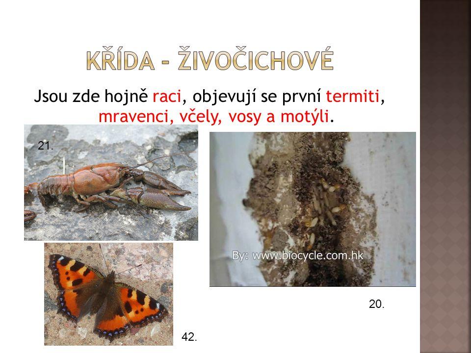 Křída - živočichové Jsou zde hojně raci, objevují se první termiti, mravenci, včely, vosy a motýli.